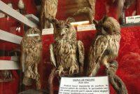 Muzeul de Ştiinţele Naturii Aiud